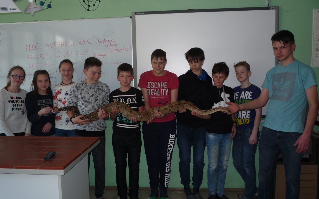Pri izbirnem predmetu ROD smo spoznali zanimive nevretenčarje in vretenčarje
