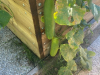 29-9-klavdija-kumara-velikanka