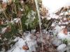 zimski-c5a1d-11